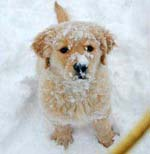 kizmet_snow